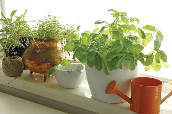 Low-Maintenance Hydroponics: Self-Watering Containers