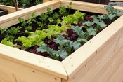 5 Raised Bed Garden Tricks Everyone Should Know