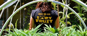 Soaking in a Little Sunshine: Sunboldt Grown Cooperative