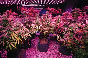 Why Humans Use Lumens and Plants Use PAR