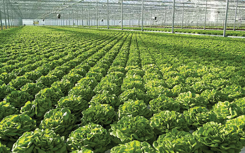 Moveable channel NFT lettuce system