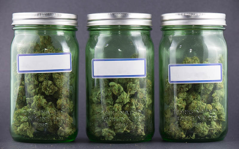 Dried and cured cannabis flower stored in glass jars.