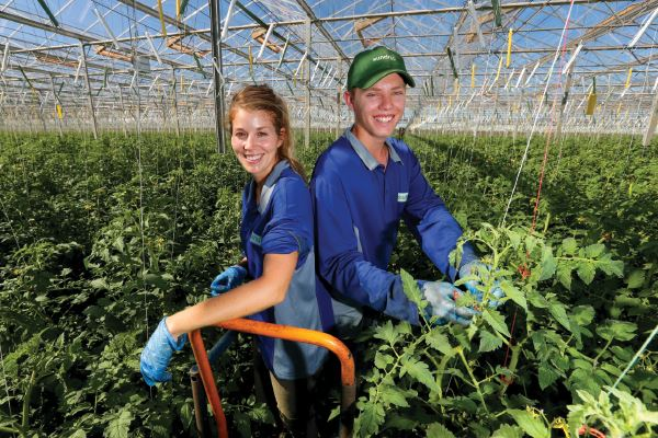 Sundrop Farms: Growing Something Out of Nothing