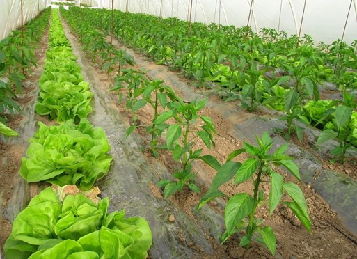 Organic Nutrients for a Sustainable Tomorrow