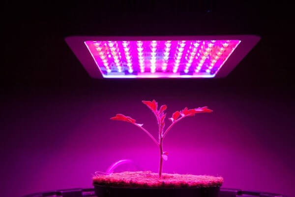 Young plant under LED grow light.