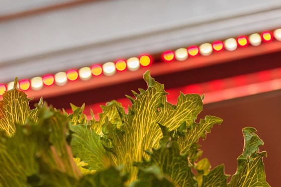 Is there a Light at the End of the Tunnel? A Look at LED Technology in Horticulture
