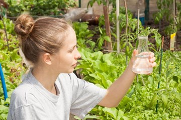The Presence and Transmission of Heavy Metals in Plant Fertilizers