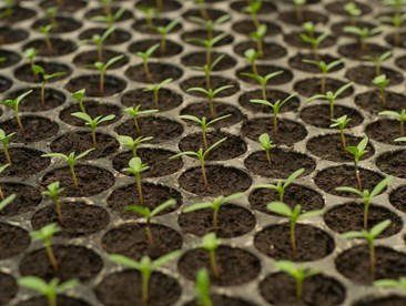 Cheap n Easy Starts: How to Germinate Seeds at Home