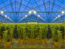 How Light Movers Work with Different Grow Light Systems