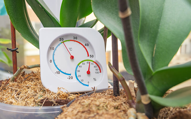 Thermometer and hygrometer to monitor optimal conditions in a grow room.