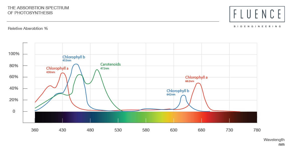 Figure 1: Absorption spectrum for chlorophyll a and b in vitro