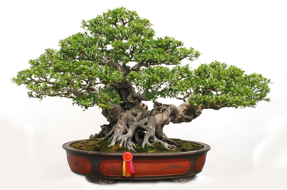 How to Select the Right Soil for Your Bonsai Tree