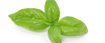 A Sea of Green Basil