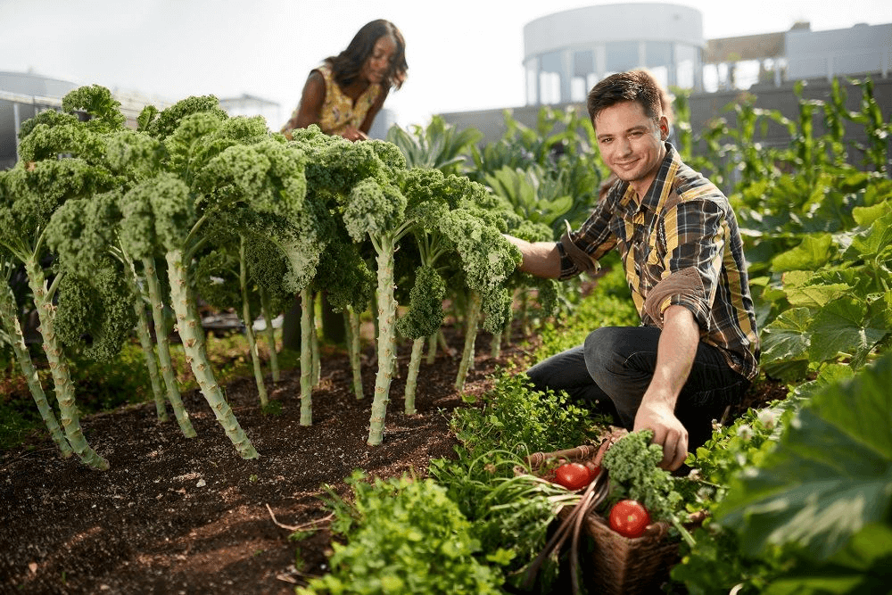 How to be a Successful Rooftop Gardener