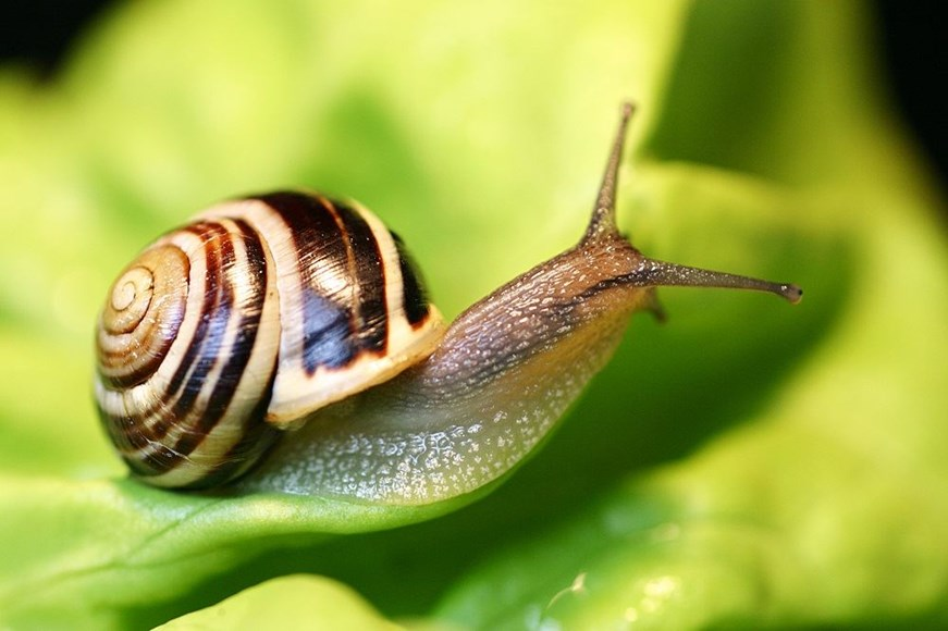 Battling Slugs and Snails
