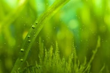 Algae Growth in Your Hydroponic System: Friend or Foe?