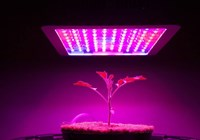 Growing Plants Under Artificial Light: What's Missing?