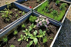 The Power of Raised Garden Beds