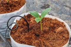 What advice do you have when switching from dirt to coco coir?