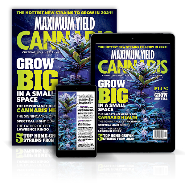 Maximum Yield Cannabis magazine covers displayed in print and on mobile.
