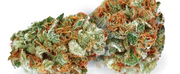 Cut & Dried Strain Review: Critical Mass