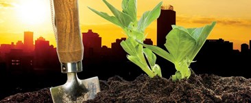 Farming & the City: Starting a Farm in the City