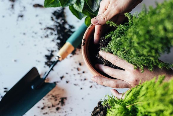 What You Need to Know About Transplanting Your Young Plants