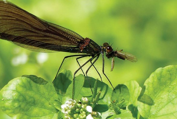 Biocontrol: A New Age of Pest Management