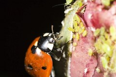 Beneficial Insects for Beginners