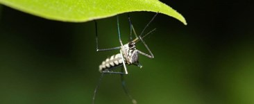 How to Control Mosquitoes in Your Garden and Backyard