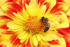 Let's Talk About...Pollination