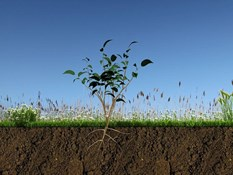 Watering Your Soil Garden Successfully