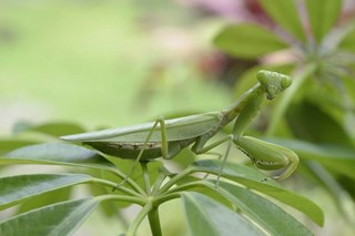 Battle of the Bugs: A Guide to Beneficial Insects