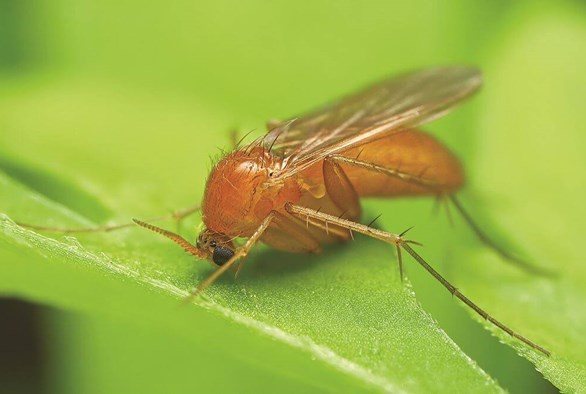 When Plants Blight Back: Plant-Eating Pests and Their Predators