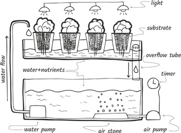 Build Your Own Aquaponics System