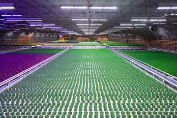 Learn Your LEDs: Lighting Metrics for Growers