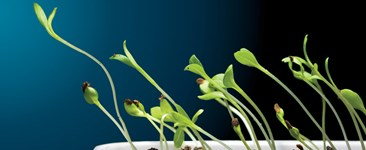 How Plant Hormones Work