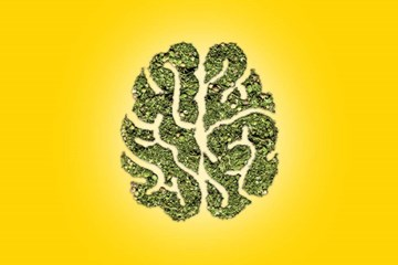 Cannabis Use and Mental Health: Things to Keep in Mind
