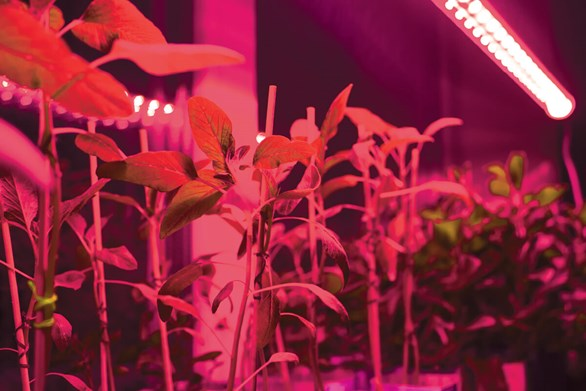Far-Red Lighting and the Phytochromes