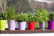The Dos and Don'ts of Container Gardening
