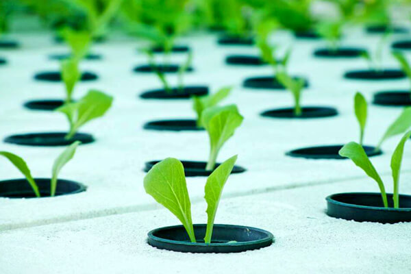 Hydroponic system can grow crops year-round in less time