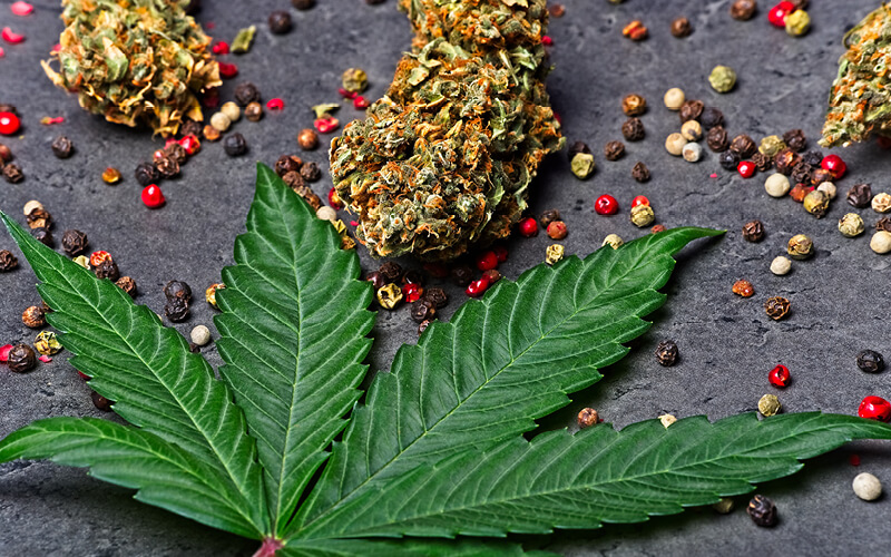 Cannabis flower and leaves surrounded by peppercorns.
