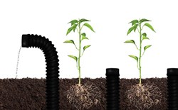 What Are Root Snorkels?