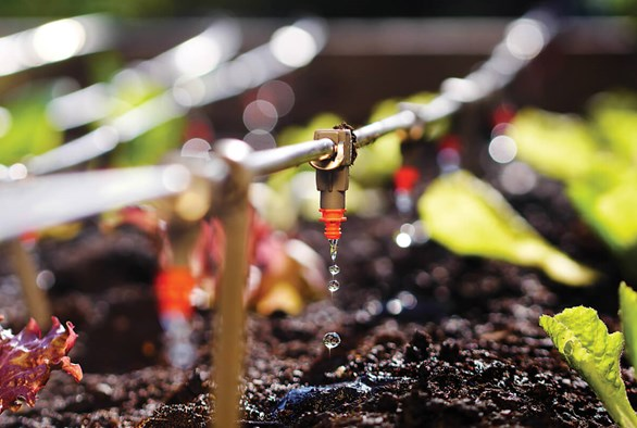 Maintenance Tips for Drip Irrigation Systems