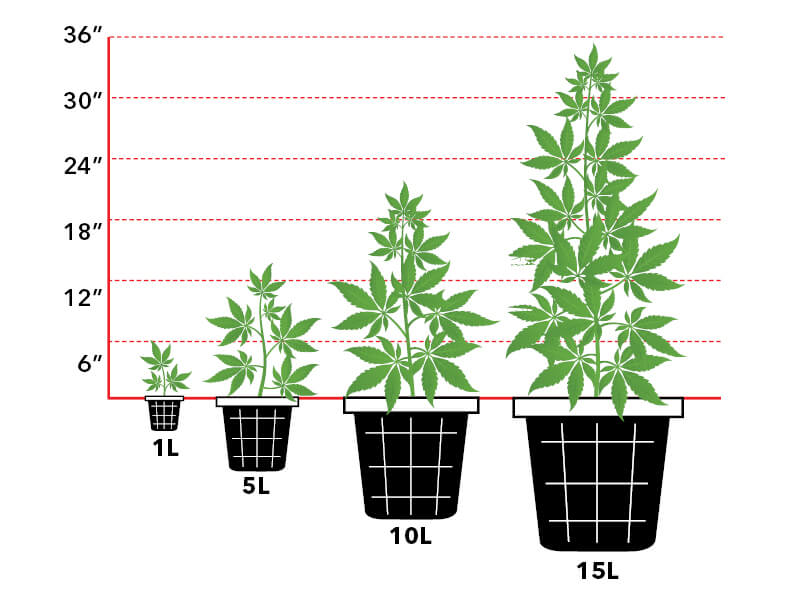 Diagram of appropriate pot to plant size