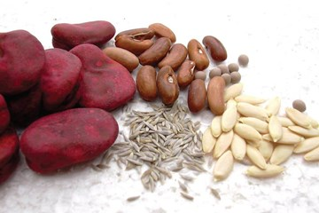 Seed Varieties and Cultivator Genetics: Know Your Origins!
