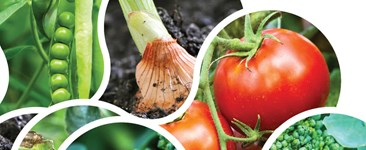 Improving Soil Quality with Crop Rotations