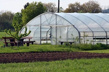 Glazing Your Greenhouse: 5 Ways to Cover Up