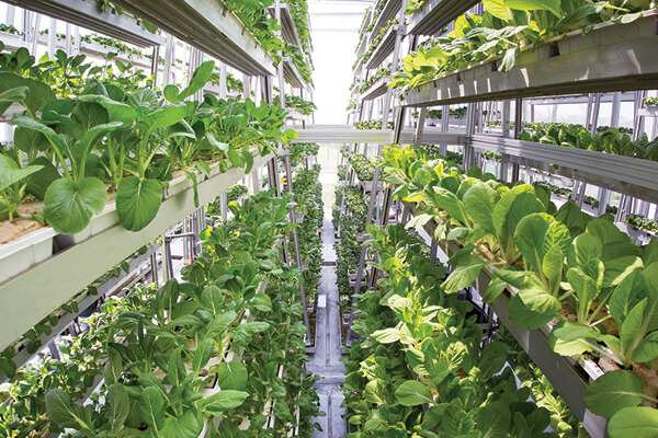 Sky Greens commercial indoor vertical farm that produces 10 tons of leafy veg a day in Singapore