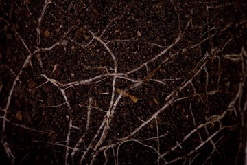 Make Room for Mycorrhizae in Your Marijuana Grow Room